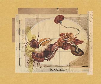 Kidney Plant, Henschke and Kendrigan