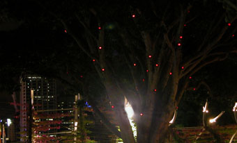 Unbearable Lightness (tree of fortune)