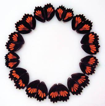 Maria Fernanda Cardoso, Butterfly Drawings/Dibujos de Mariposas, 2002