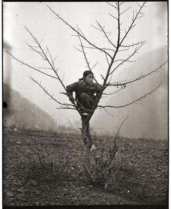 Girl and Tree, 2006, Adou