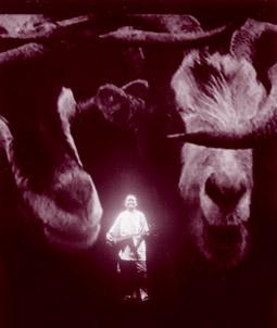 Tsering Tsewang, Hanging onto the tail of a goat. A Tibetan Journey