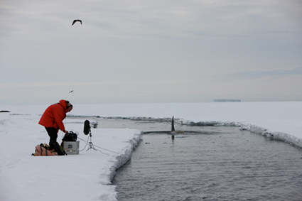 Chris Watson recording an orca in the Ross Sea