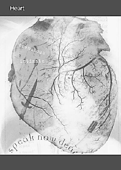 Norie Neumark & Maria Miranda Dead Centre: the body with organs