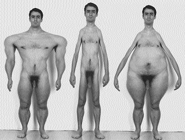 John Tonkin, Elastic Masculinities