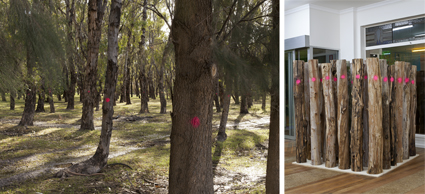 Danielle Hobbs, 7000 eucalypts, 2013, mixed media installation, Palimpsest