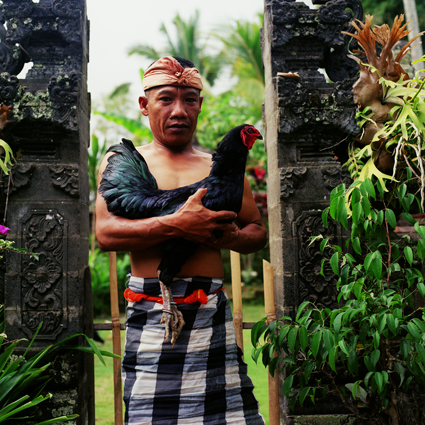Emmanuel Angelikas, BUKA, Ketut and his prize cock, Ubud, 2005, courtesy the artist