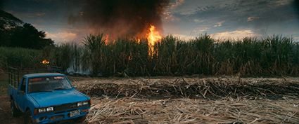 Burning Sugar Cane Field in El Salvador. Still from