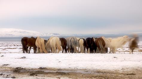 Horses, Tim Bruniges, Drones