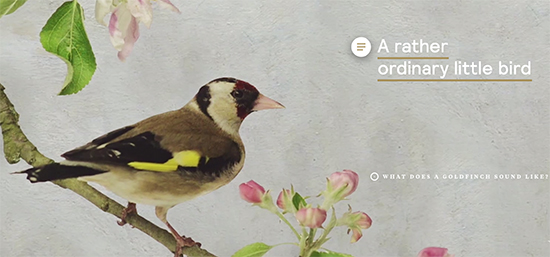Discover the story of The Goldfinch