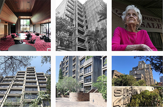 selection of images from #saveoursirius on Instagram